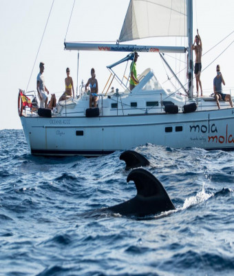 Mola Mola Private Boat Trip - Including a bottle of Moet Chandon - without transfers