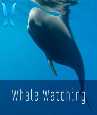 Avistamiento de ballenas - Yacht