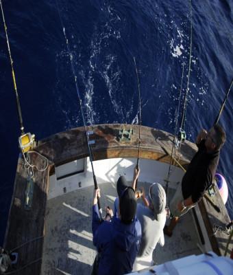 Pesca y espectador