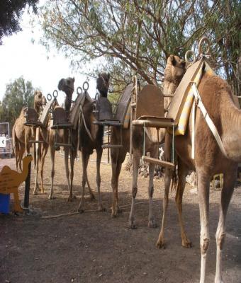 CAMEL PARK 30 MIN + SNACK
