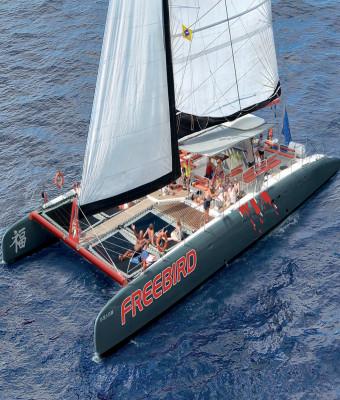 Catamarán Freebird - directo