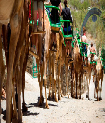 Camel park + Transfer + Comida