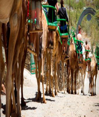 Camel park + Transfer