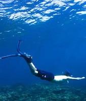 Dolphin and swim Multiacuatic