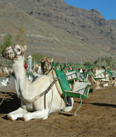 Camel Safari La Baranda