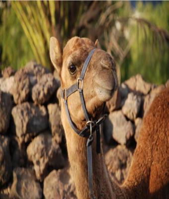 CAMEL PARK 20 MIN