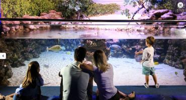 Palma Aquarium (2)