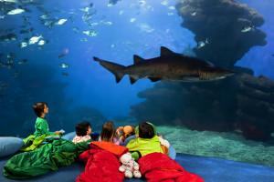 Palma_Aquarium-Canguro_Tiburón