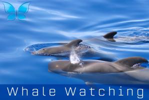 Whalewatching6