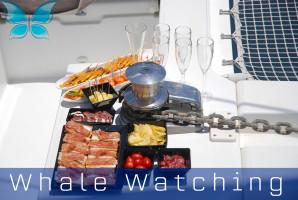 Whalewatching8