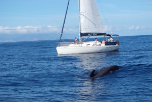 Tenerife Sailing Charter (4)