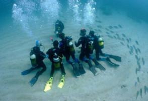 Diving5-600x408