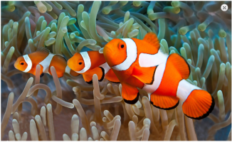 Palma Aquarium (3)