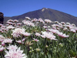 Excursión por el Parque Nacional del Teide