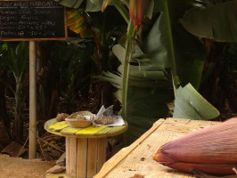 Finca Las Margaritas Banana Experience Tenerife