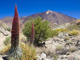 Excursión de medio día a las Cañadas del Teide con paseo opcional en teleférico