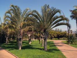 Palmetum Santa Cruz de Tenerife