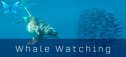 Whalewatching3