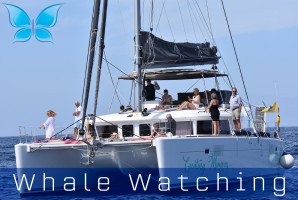 Whalewatching4