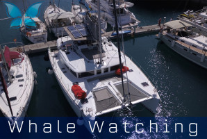 Whalewatching11