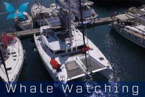 Whalewatching11