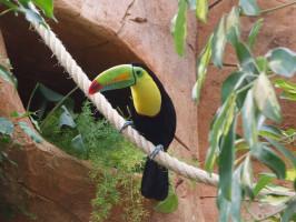 Parque zoológico y botánico Jungle Park