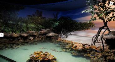 Palma Aquarium (5)